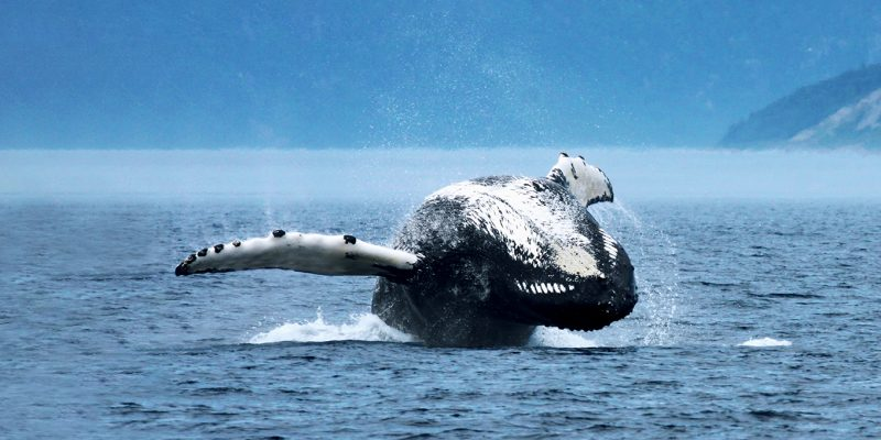 Visit Côte-Nord Whale