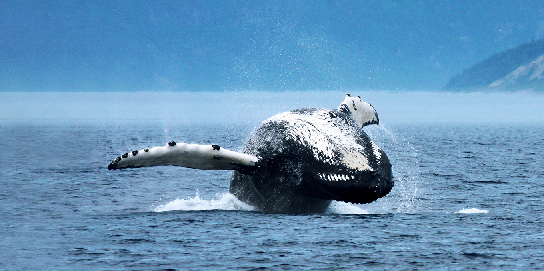 visit-co%cc%82te-nord-whale