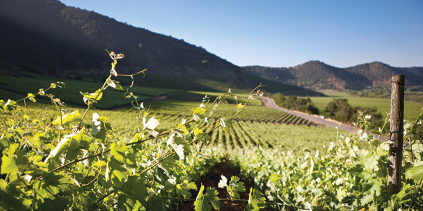 Travel guide: Chile's best vineyards