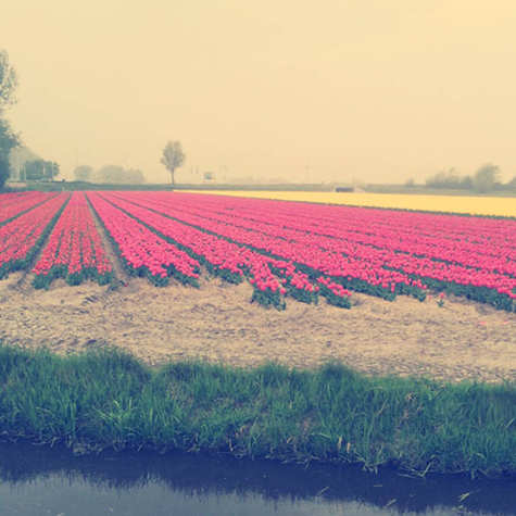 ELLE Travel Slideshow: A drive along the Netherlands' Flower Route