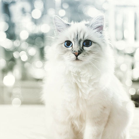 choupette-darling-the-best-times-karl-lagerfeld-talked-about-his-cat-2