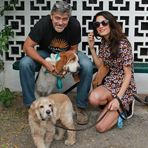 George and Amal Clooney got a dog