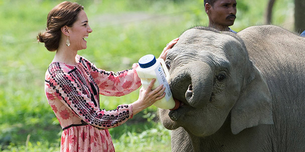 kate-middleton-fed-baby-elephants-and-tiny-rhinos-today-2