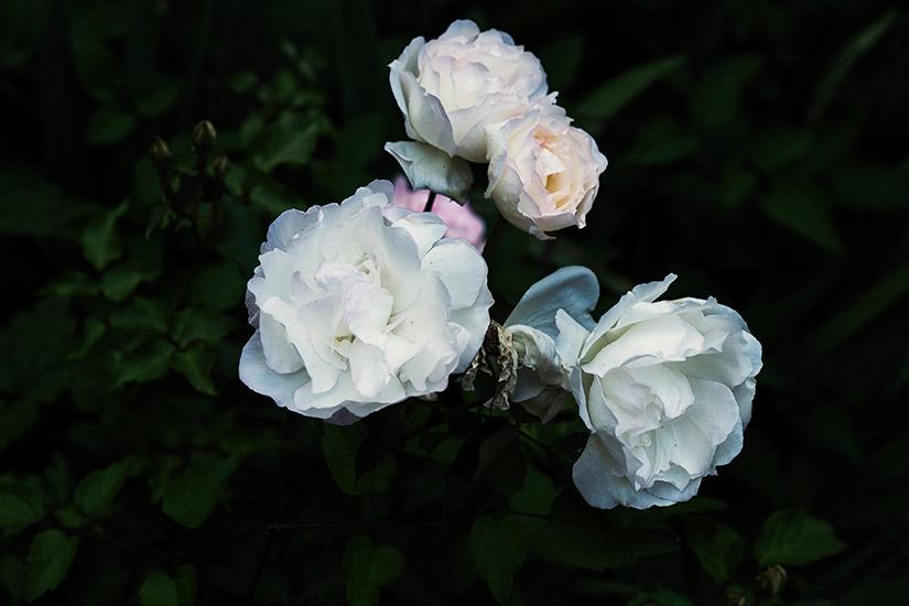 73505fda-5777-43e0-86ee-f2c7c85b4930-white-roses-grammys-2018.jpg
