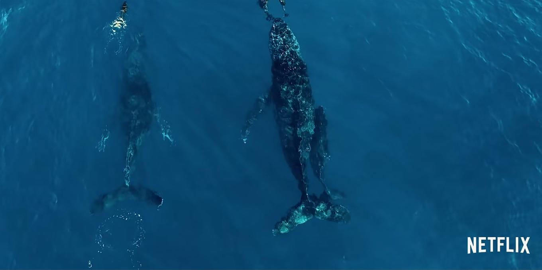 seaspiracy-documentary