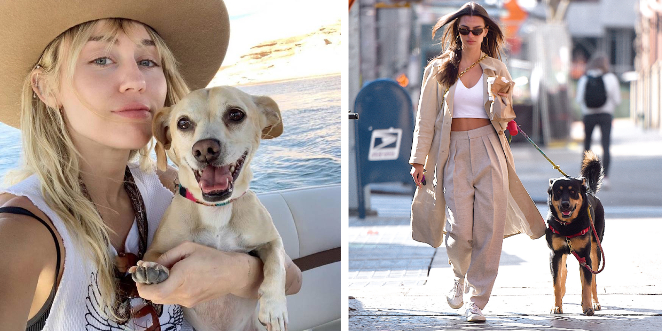 celebrities-and-their-pets