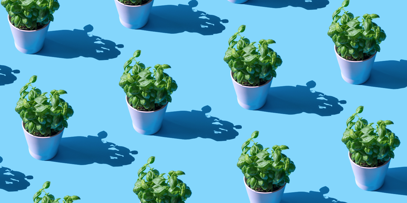 plants-for-your-zodiac-sign