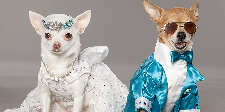 dogs-wedding