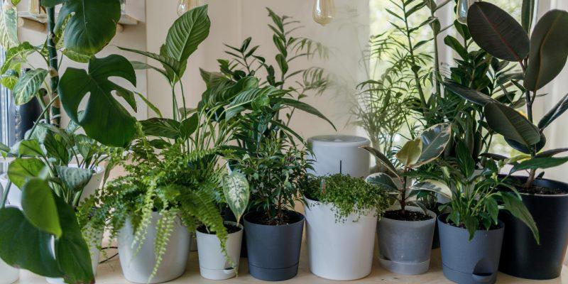 Plants for a Black Thumb